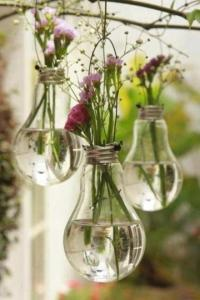 bulbs and flowers